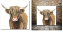 """Courtside Market Highland Cattle II Gallery-Wrapped Canvas Wall Art - 16"""" x 16"""""""