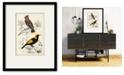 "Courtside Market D'Orbigny Birds V 20"" x 24"" Framed and Matted Art"