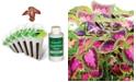 AeroGarden Colorful Coleus 6-Pod Seed Kit