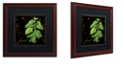"Trademark Global Color Bakery 'Black Gold Herbs Iv' Matted Framed Art, 16"" x 16"""