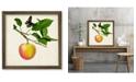 "Courtside Market Fruit with Butterflies IV 18"" x 18"" Framed Canvas Wall Art"