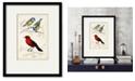 "Courtside Market D'Orbigny Birds III 16"" x 20"" Framed and Matted Art"