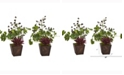 Nearly Natural 15in. Succulent, Clover and Coffee Leaf Artificial Plant in Decorative Planter Set of 2