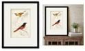 "Courtside Market D'Orbigny Birds VIII 16"" x 20"" Framed and Matted Art"