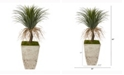 Nearly Natural 44in. Pony Tail Palm Artificial Plant in Country White Planter