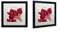"Trademark Global Color Bakery 'Amaryllis ' Matted Framed Art, 16"" x 16"""