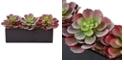 """Nearly Natural 6"""" Mini Echeveria Artificial Succulent in Rectangular Planter"""