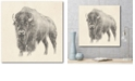 """Courtside Market Western Bison Study Gallery-Wrapped Canvas Wall Art - 20"""" x 20"""""""