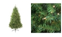 Northlight 12' Pre-Lit Northern Pine Full Artificial Christmas Tree - Clear Lights