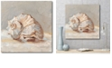 """Courtside Market Impressionist Shell Study II Gallery-Wrapped Canvas Wall Art - 20"""" x 20"""""""
