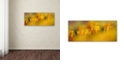 "Trademark Global Cora Niele 'Aurora Tulips' Canvas Art, 20"" x 47"""