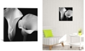 "iCanvas Softness Ii by Assaf Frank Wrapped Canvas Print - 18"" x 18"""
