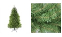 Northlight 14' Northern Pine Full Artificial Christmas Tree - Unlit
