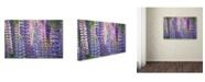 "Trademark Global Cora Niele 'Blue Pink Lupine Flowers' Canvas Art - 19"" x 12"" x 2"""