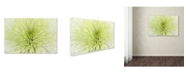 "Trademark Global Cora Niele 'Lime Light Spider Mum' Canvas Art - 24"" x 16"" x 2"""