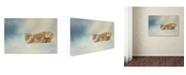 "Trademark Global Jai Johnson 'Snow Diving' Canvas Art - 24"" x 16"" x 2"""