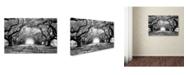 "Trademark Global Mike Jones Photo 'Oak Alley inf CHECK' Canvas Art - 47"" x 30"" x 2"""
