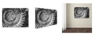 """Trademark Global Moises Levy 'Amonita 1' Canvas Art - 19"""" x 14"""" x 2"""""""