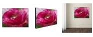 "Trademark Global Kurt Shaffer 'Peppermint Tulip' Canvas Art - 14"" x 19"""