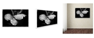 "Trademark Global PIPA Fine Art 'Raindrops on Wild Rose' Canvas Art - 22"" x 32"""