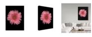 "Trademark Global Susan S. Barmon 'Gerber Daisy 3' Canvas Art - 35"" x 47"""