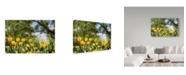"Trademark Global Incredi 'Yellow Tulips' Canvas Art - 47"" x 30"""