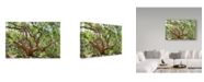 "Trademark Global Incredi 'Large Tree' Canvas Art - 47"" x 30"""