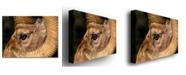 "Trademark Global Nicole Dietz 'Yellowstone Big Horn' Canvas Art - 32"" x 22"""