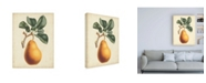 "Trademark Global Horto Van Houtteano Antique Pear Botanical I Canvas Art - 36.5"" x 48"""