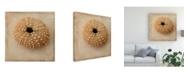"Trademark Global Judy Stalus Sepia Shell III Canvas Art - 15"" x 20"""