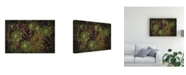 "Trademark Global Kurt Shaffer Abstract Lily Pad Study Canvas Art - 20"" x 25"""