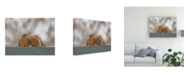 "Trademark Global Shlomo Waldmann Lesser Kestrel Kiss Canvas Art - 20"" x 25"""