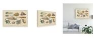 "Trademark Global Wild Apple Portfolio Shell Etchings II Canvas Art - 37"" x 49"""