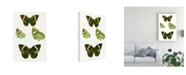 "Trademark Global Vision Studio Butterfly Specimen VII Canvas Art - 27"" x 33.5"""