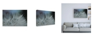 "Trademark Global Renee W. Stramel Macro Dandelion VII Canvas Art - 15.5"" x 21"""