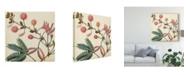 "Trademark Global Vision Studio Garden Bounty IV Canvas Art - 15"" x 20"""