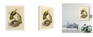 "Trademark Global Nozeman Nozeman Birds and Nests II Canvas Art - 20"" x 25"""