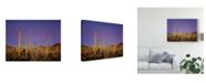 "Trademark Global David Drost Cacti View I Canvas Art - 20"" x 25"""