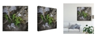 "Trademark Global Christine Sainte-Laudy Stone Attachment Canvas Art - 15"" x 20"""