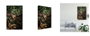 "Trademark Global Pixie Pics Brush Forest Path Canvas Art - 20"" x 25"""
