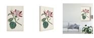 """Trademark Global Curtis Curtis Garden Beauties IV Canvas Art - 37"""" x 49"""""""