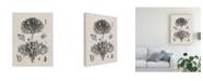 "Trademark Global Vision Studio Coral Specimen III Canvas Art - 15"" x 20"""