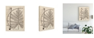 "Trademark Global Vision Studio Distinctive Leaves I Canvas Art - 37"" x 49"""