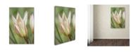 "Trademark Global Cora Niele 'Tulip Primulina' Canvas Art - 24"" x 16"" x 2"""