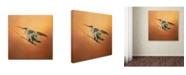 "Trademark Global Jai Johnson 'Hummingbird On Peach' Canvas Art - 24"" x 24"" x 2"""