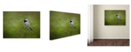 "Trademark Global Jai Johnson 'Spring Chickadee' Canvas Art - 19"" x 14"" x 2"""