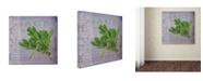 "Trademark Global Cora Niele 'Classic Herbs Sage' Canvas Art - 18"" x 18"" x 2"""