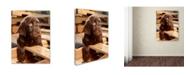 "Trademark Global Mike Jones Photo 'Bryce Puppy' Canvas Art - 24"" x 18"" x 2"""