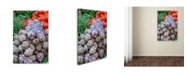 "Trademark Global Robert Harding Picture Library 'Artichokes' Canvas Art - 47"" x 30"" x 2"""