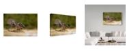 "Trademark Global Milan Zygmunt 'Peregrine Falcon Swooping' Canvas Art - 47"" x 2"" x 30"""